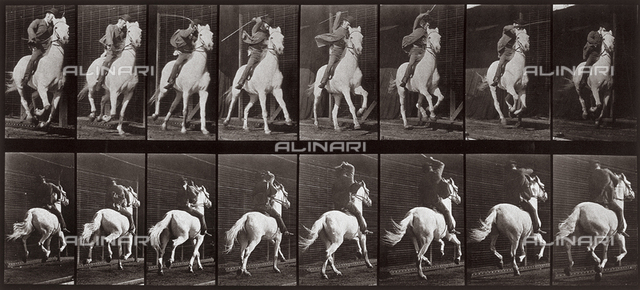 """Animal Locomotion"" (plate 634); sequence with jockey on trotting horse"