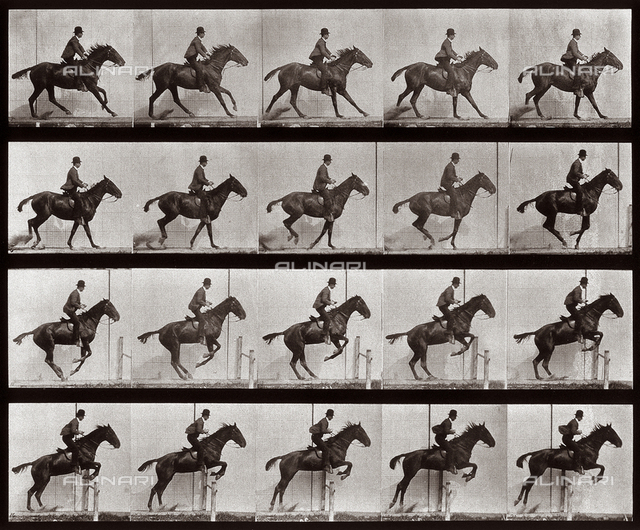 """Animal Locomotion"" (plate 636); sequence with jockey on horseback jumping a hurdle"