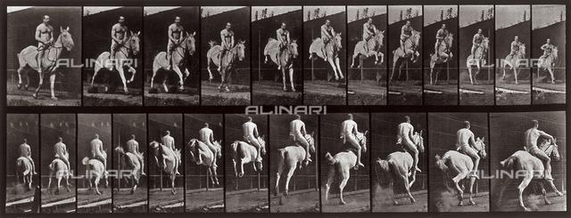 """""""Animal Locomotion"""" (tav. 646): sequenza con fantino seminudo che salta con il cavallo"""
