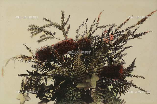 """Wild flowers and animals of Australia"": vegetal composition of ""red bottle-brush"""