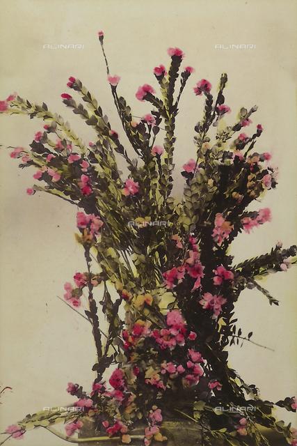 """Wild flowers and animals of Australia"": composition of boronia flowers (Australian rose)"