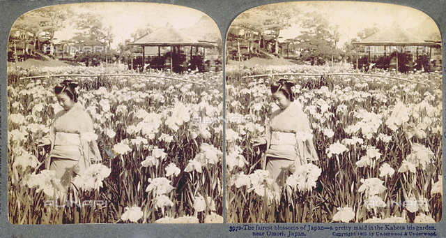 An iris garden near Omori (Japan). In the foreground, young woman in a kimono. In the background akiosk and a few trees