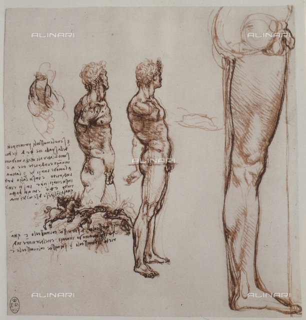Study of the proportions of a human body, drawing, Royal Library, Windsor.
