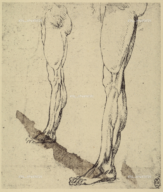 Study of legs, drawing, Royal Library, Windsor.