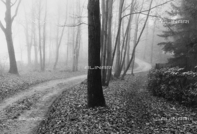 View of the Taino forest with fog, Varese