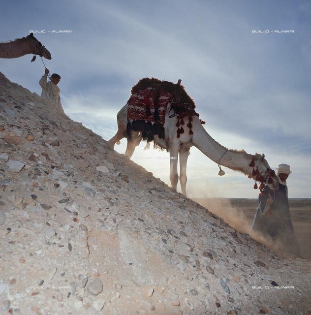 Sahara: camel at sunset
