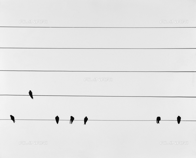 Pigeons over the wires of the light