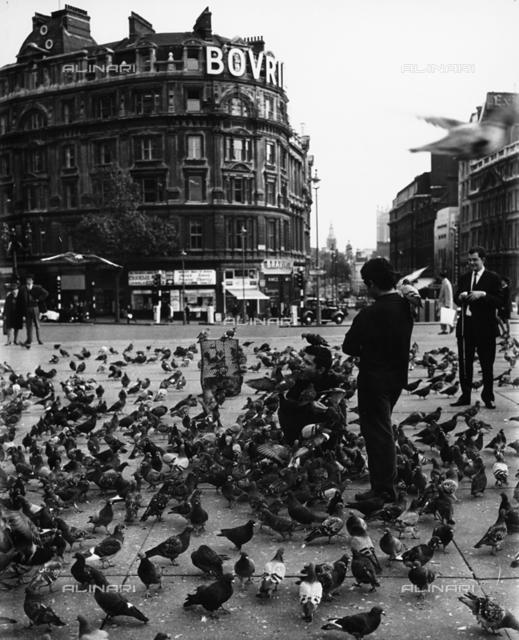 Pigeons in Trafalgar Square