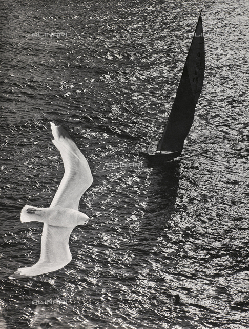 Open sea with a sail boat sailing with spanker and jib unfurled to the wind. The image of a seagull with its wings open has been superimposed, creating an singular artistic effett, as the boat itself and its shadow projected by the sun on the surface of the water seem to be the shadow of the seagull. The diminishing reflections of the light on the choppy sea complete the unusual atmosphere of the photograph.