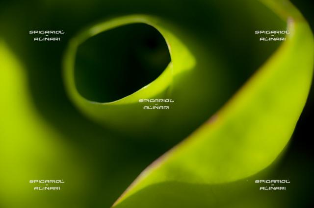 verdi sfumature@Radicchio Verdon di Roncade
