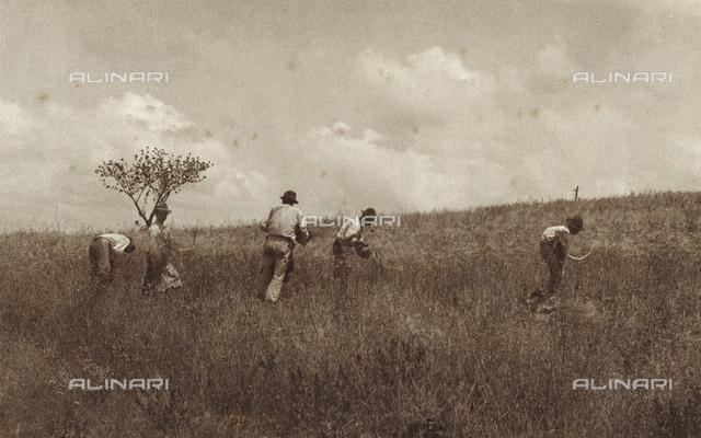 A group of men harvesting grain
