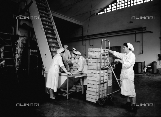 Loading fruit onto a conveyer belt at the Colombani factory at Portomaggiore, Ferrara