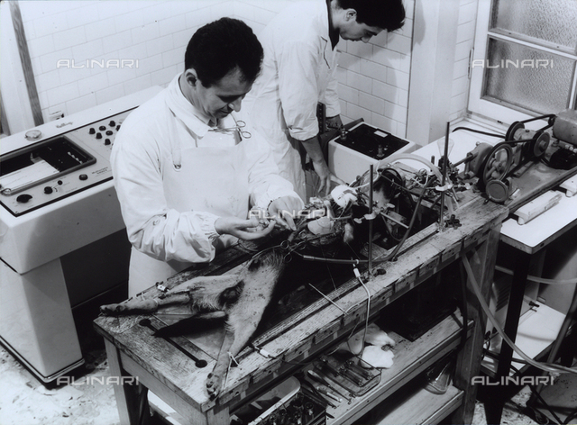 Research activities and medico-pharmaceutical experiments taking place in the SIMES laboratory. The vivisection of a dog is visible.