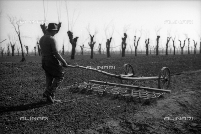 Plowing in the field for cultivation of hemp