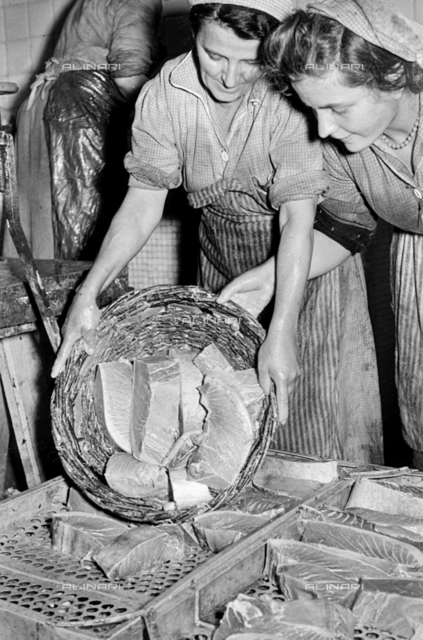 Fish farm Regnoli: Workers with a tuna basket during the processing