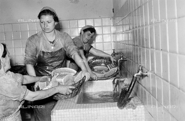 Fish farm Regnoli: workers with tuna baskets