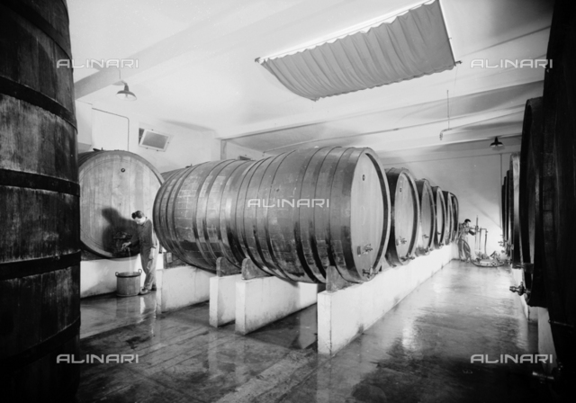 Barrels of the Distillery Fabbri plant, Bologna