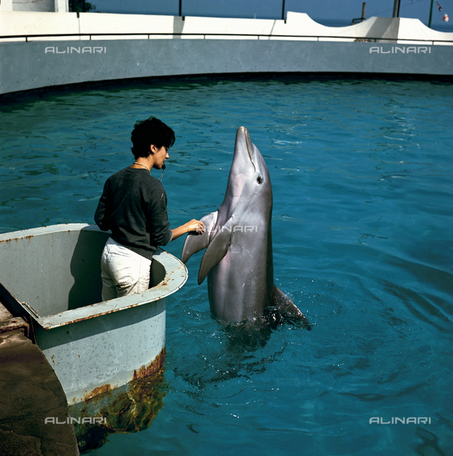 Dolphin with an instructor at the Riccione Aquarium