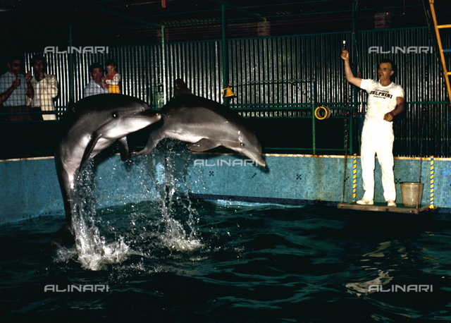 Dolphins during a performance at the Delfinario, Rimini