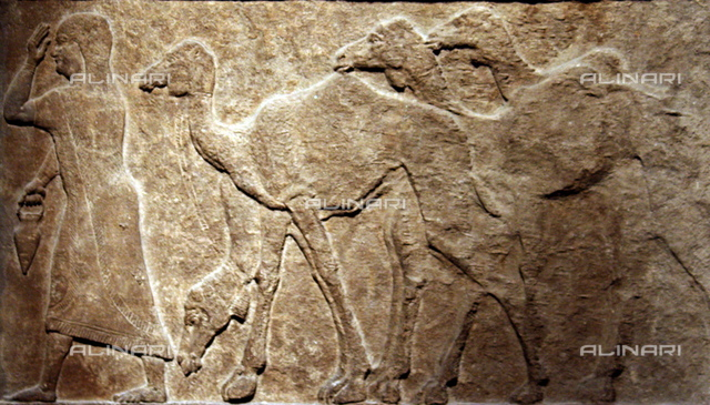 Captured camels. Assyrian, about 728 BC From Nimrud, Central Palace The woman on the left and the herd of camels behind her are part of procession of prisoners and body captured during one of the campaigns of Tiglath Pileser III (744-727 BC) against Arab enemies. The series is continued to the right.