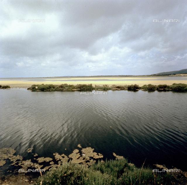 The Lagoon of Orbetello